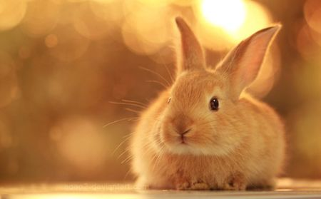 (forrás: Bunny Picture)